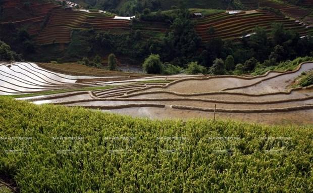 越南:木岗寨梯田美景 hinh anh 12