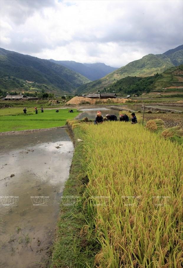 越南:木岗寨梯田美景 hinh anh 13