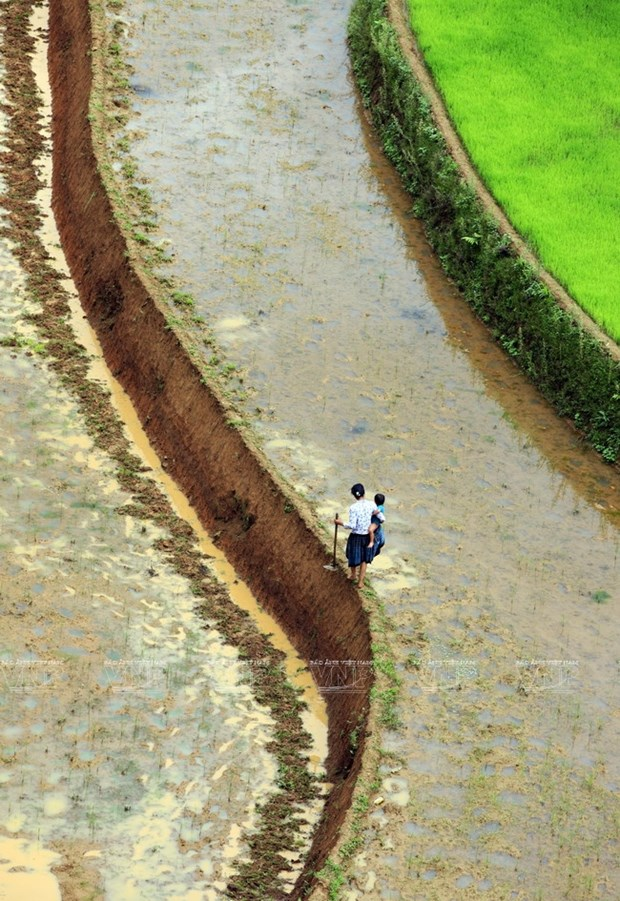 越南:木岗寨梯田美景 hinh anh 14