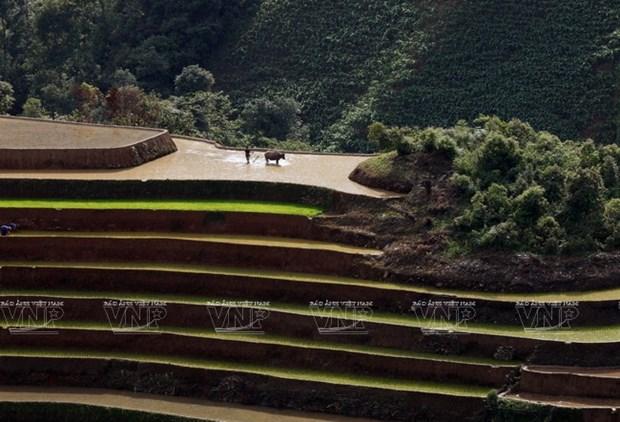 越南:木岗寨梯田美景 hinh anh 15