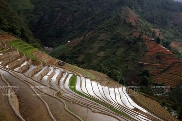 越南:木岗寨梯田美景 hinh anh 16