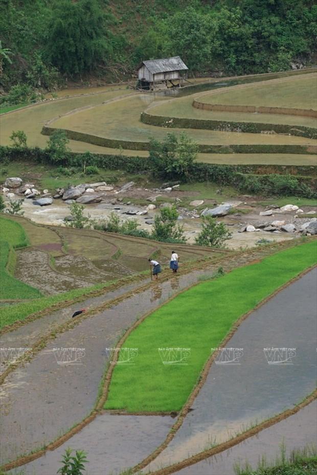 越南:木岗寨梯田美景 hinh anh 5
