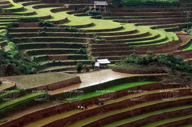 越南:木岗寨梯田美景 hinh anh 8
