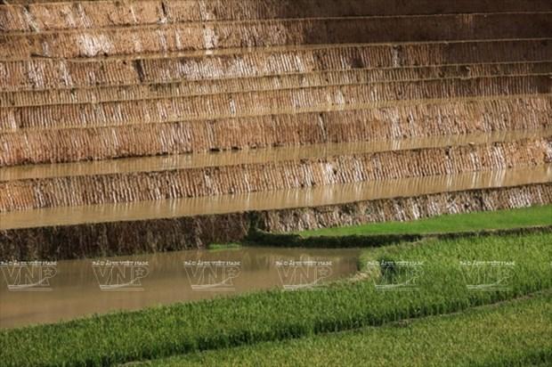 越南:木岗寨梯田美景 hinh anh 9