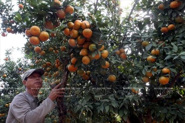 河内发展高科技农业 hinh anh 1