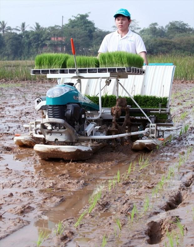 河内发展高科技农业 hinh anh 3