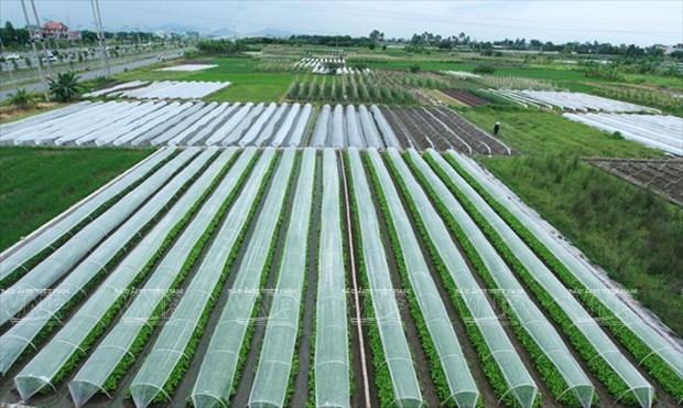 河内发展高科技农业 hinh anh 5