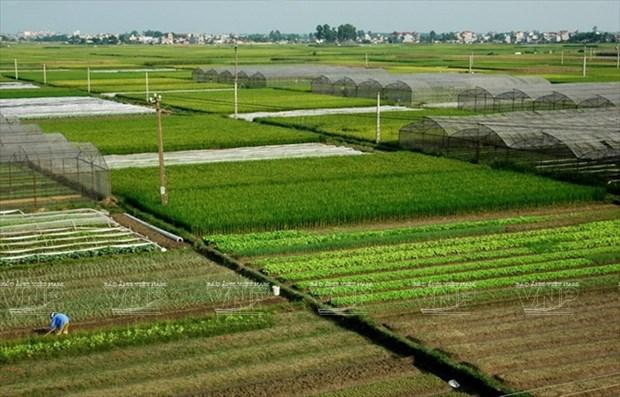 河内发展高科技农业 hinh anh 6