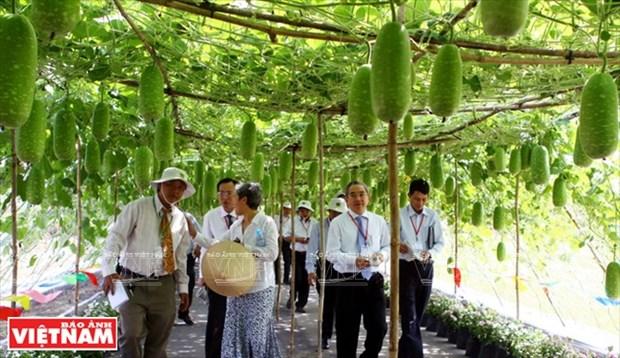 世界对越南革新时期的经济成就印象深刻 hinh anh 7