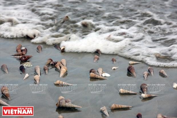 越南祖国最北的海滩——茶古海滩 hinh anh 10