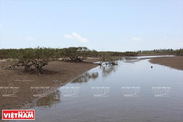越南祖国最北的海滩——茶古海滩 hinh anh 6
