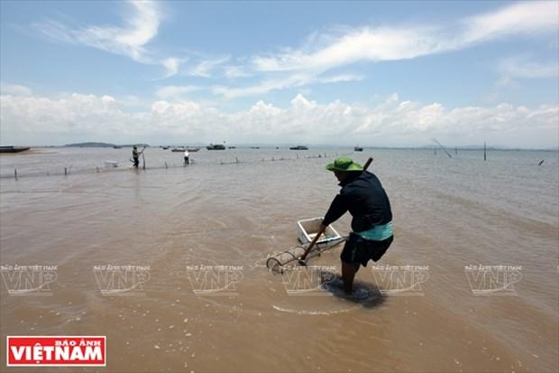 越南祖国最北的海滩——茶古海滩 hinh anh 8