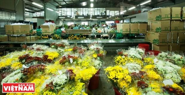 大叻蔬菜与花卉王国 hinh anh 12