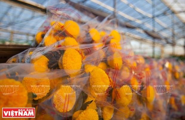 大叻蔬菜与花卉王国 hinh anh 23