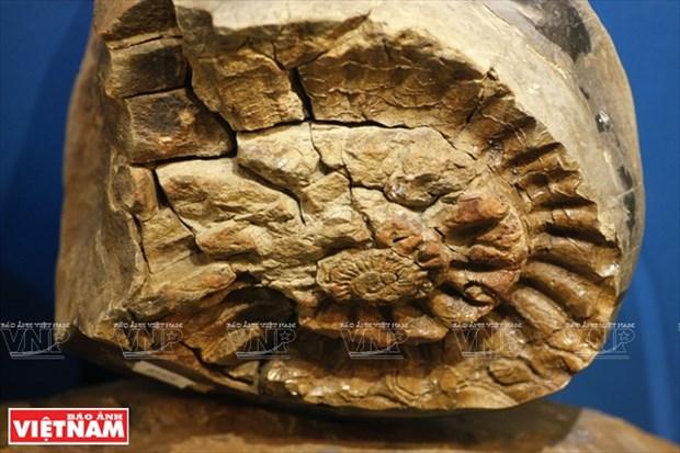 越南第一座自然博物馆 hinh anh 11