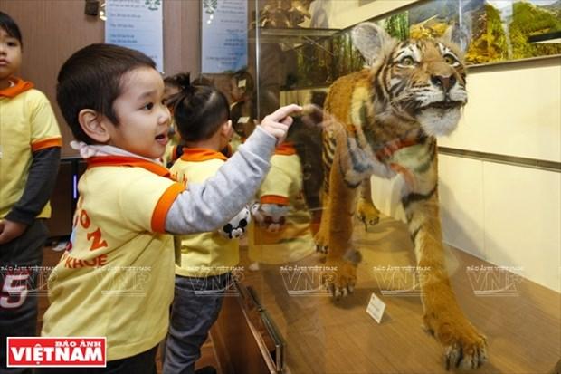 越南第一座自然博物馆 hinh anh 2