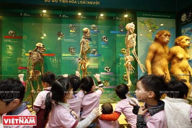 越南第一座自然博物馆 hinh anh 3