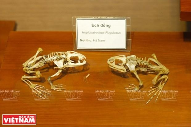 越南第一座自然博物馆 hinh anh 5