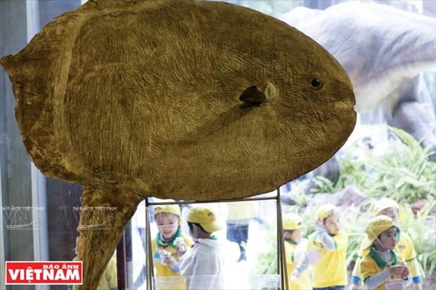 越南第一座自然博物馆 hinh anh 6