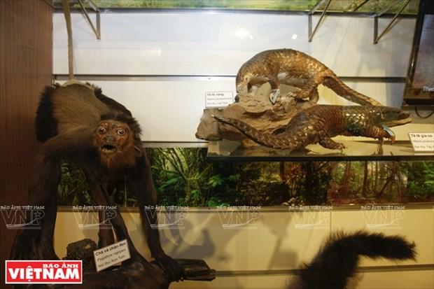 越南第一座自然博物馆 hinh anh 8