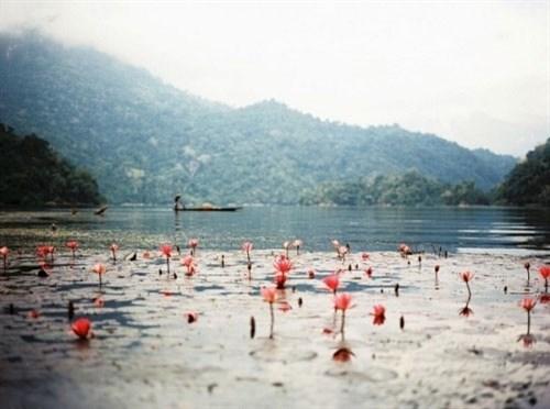 越南各地美丽的湖泊(组图) hinh anh 1