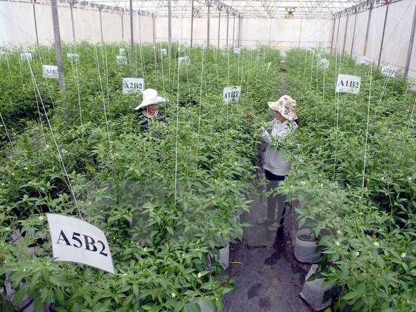 越日企业加强农业领域合作 hinh anh 1