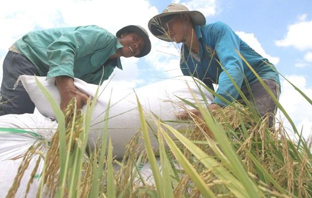 扶贫济困:越南三十年革新开放的成就 hinh anh 1