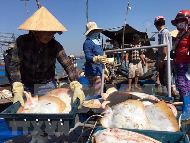 越南水产业走向大海 为推动海洋经济发展注入动力 hinh anh 1