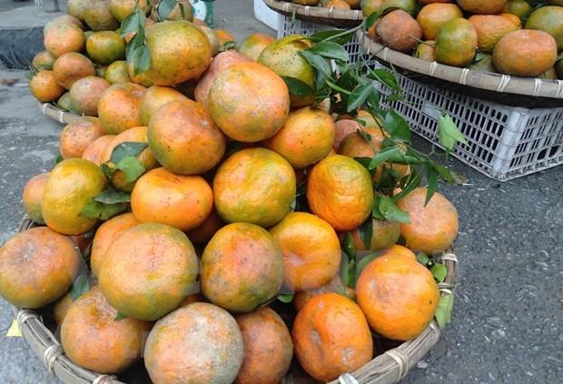 补橙子——香山山区的主要农产品 hinh anh 2
