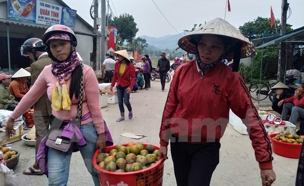 补橙子——香山山区的主要农产品 hinh anh 3