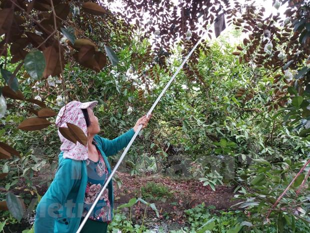 越南工商会:要全力做好疫情防控和企业帮扶 hinh anh 3