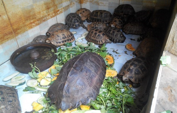 越南推出多项紧急措施阻止野生动物交易活动 hinh anh 1