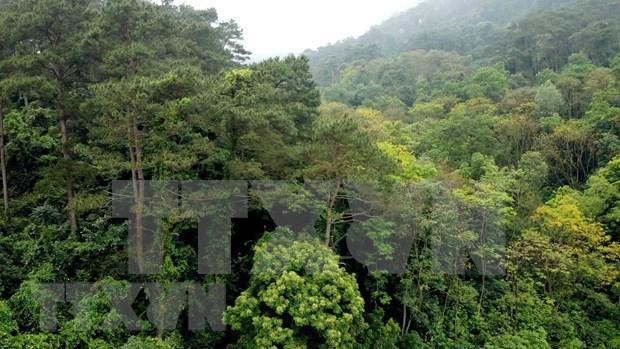 游览越南生物多样性保护区--三岛国家公园 hinh anh 2