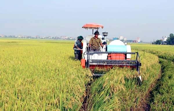 2020年前9个月农业对永福省经济增长的贡献率为0.13% hinh anh 1