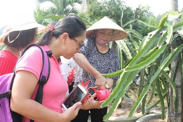 平顺省大力促进与可持续农业相结合的旅游产品开发工作  hinh anh 1