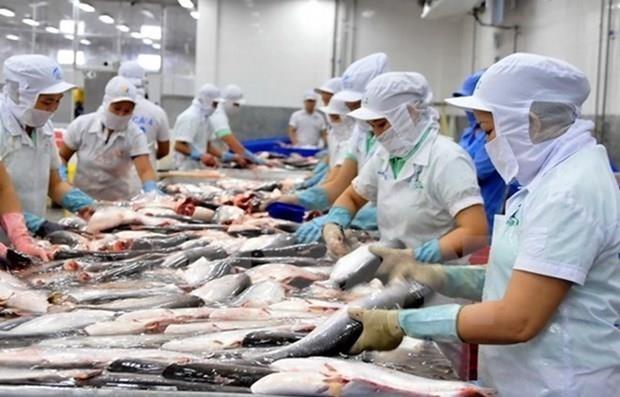 美国FSIS确认越南鲶鱼监管系统与美国等效 hinh anh 1