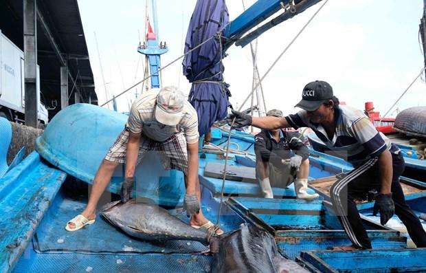 《东盟今日》高度评价越南在打击非法捕捞行为中所作出的努力 hinh anh 1