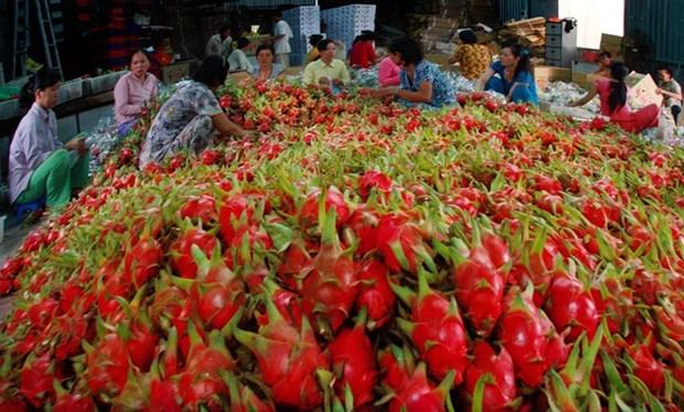 今年前10个月越南向国际挑剔市场出口一万吨新鲜水果 hinh anh 1