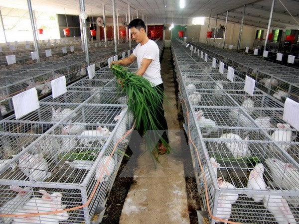 越南政府致力于最高程度实现2016年经济社会发展目标 hinh anh 1