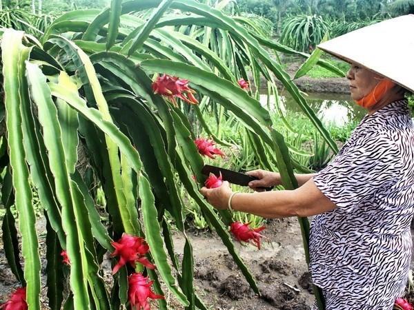 今年前11月越南水果蔬菜出口额达近22亿美元 hinh anh 1