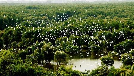 同塔梅最具魅力的生态旅游区——高琼 hinh anh 1