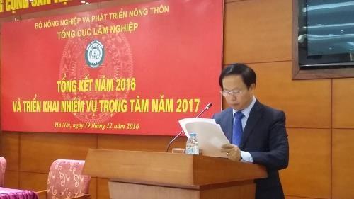 2017年越南森林覆盖率将增至41.25% hinh anh 1