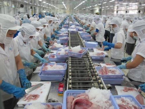 2016年越南对中国的查鱼出口额达逾3亿美元 hinh anh 1
