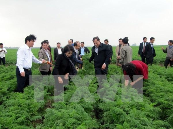 国会主席阮氏金银:海阳省各级党委、政府重视并为农业生产创造便利 hinh anh 1