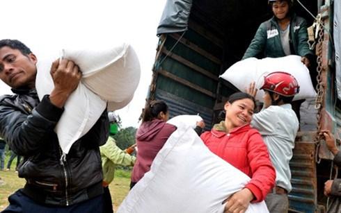 政府总理批准向平定省洪灾灾民提供两千吨大米紧急援助 hinh anh 1