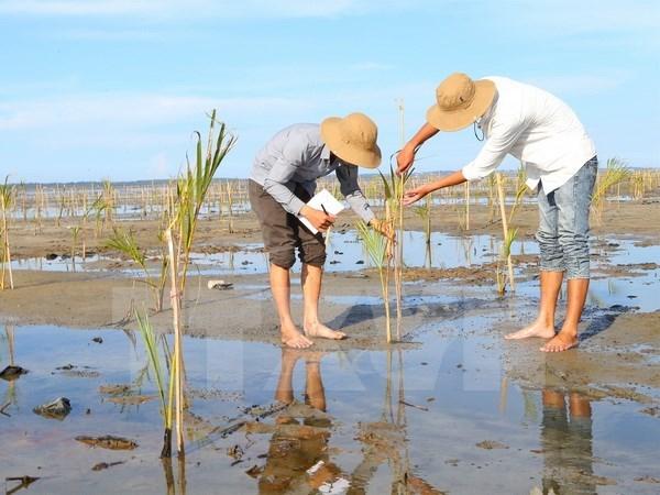 越南积极参加东盟有关环境保护的活动 hinh anh 1