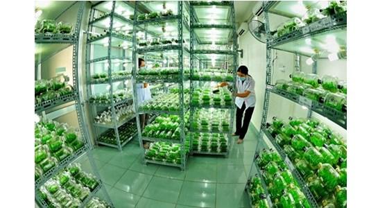 着力推进高技术农业发展 hinh anh 1