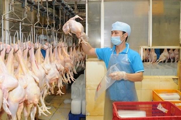 2017年越南有望对日本出口鸡肉 hinh anh 1
