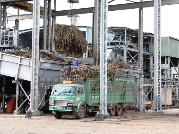 越南制糖业:促进结构调整加快融入步伐 hinh anh 1