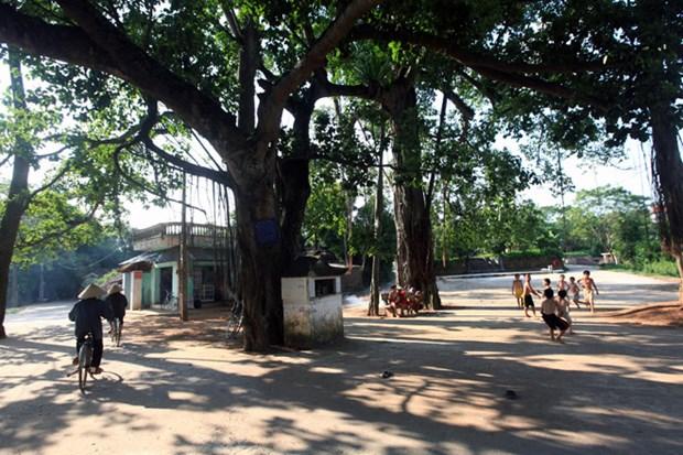 越南乡村生活空间的组织结构 hinh anh 1